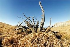 单独横向夏天结构树 免版税库存照片