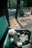 单独熊 库存照片