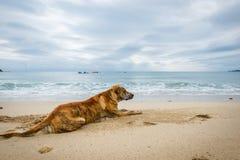 单独狗在海滩沙子 免版税库存图片
