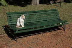 单独猫在公园 免版税库存照片