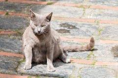 单独猫 库存照片