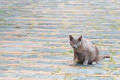 单独猫 免版税库存照片