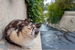 单独离群猫在雨以后的街道上 免版税库存照片