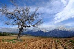 单独秋天结构树 库存图片