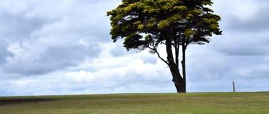 单独突出唯一的结构树 图库摄影