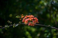 单独站立在一个微小的分支的惊人的红色花 库存图片