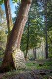 单独站立在森林里的被忘记的墓碑 免版税图库摄影