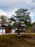 单独站立的树 免版税图库摄影