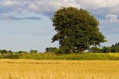 单独结构树 免版税库存照片