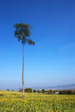 单独结构树 免版税库存图片