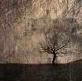 单独结构树 库存图片