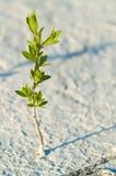 单独绿色植物 免版税库存图片