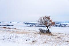 单独美丽的域绿色横向夏天日落结构树 第一个雪冬天 库存照片