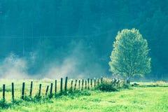 单独美丽的域绿色横向夏天日落结构树 免版税库存照片