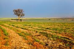单独美丽的域绿色横向夏天日落结构树 免版税库存图片