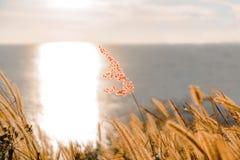 单独草在海边 免版税库存图片