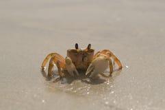 单独螃蟹 图库摄影
