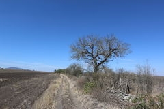 单独豆科灌木在沙漠 库存图片