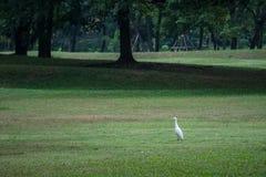 单独走为狩猎的橡胶在早晨在公园 库存照片