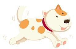 单独跑逗人喜爱的狗 库存照片