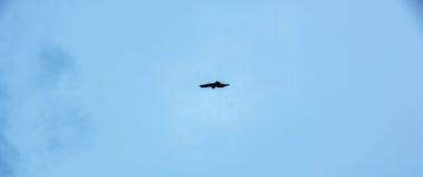 单独飞行在天空的鸟 库存图片