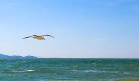 单独飞行在海滩的海鸥 库存图片