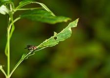 单独飞行绿色叶子 免版税库存图片
