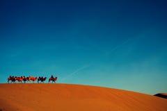 单独骆驼沙漠队伍 库存照片
