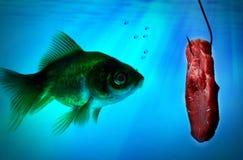 单独鱼在黑暗的水中 免版税库存图片