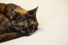 单独,疯狂或沉思猫 免版税库存照片