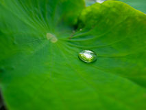 单独水下落在莲花叶子 库存照片