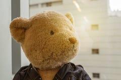 单独wating在与温暖的太阳火光的窗口旁边的玩具熊  免版税库存图片