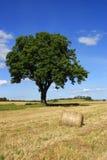 单粒宝石结构树 免版税库存图片