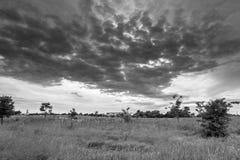 单色图象 在开花的Bogolyubovo草甸的阴沉的天空,弗拉基米尔地区,俄罗斯 图库摄影