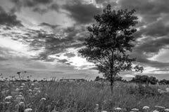 单色图象 在开花的Bogolyubovo草甸的阴沉的天空,弗拉基米尔地区,俄罗斯 免版税图库摄影