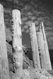 单色树桩 免版税库存照片