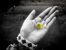 单色照片和一朵黄色花 免版税图库摄影
