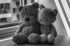 单色熊和小猫由在阴影的窗口戏弄坐 库存照片