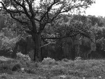 单色结构树 图库摄影