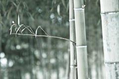 单调的竹子 免版税库存照片