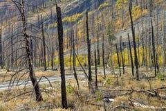 单车手go的通过石渣路的一个被烧的森林 库存图片