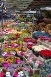 卖不同的五颜六色的花的室外市场在斯德哥尔摩, 免版税库存照片