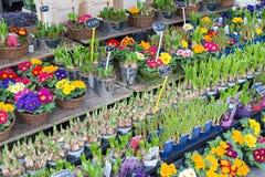 卖几朵新鲜的荷兰花的市场立场 库存图片