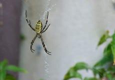 卖力蜘蛛 库存图片