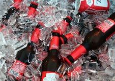 卖变冷的百威啤酒 免版税库存图片