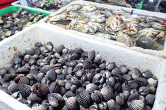 卖在地方市场上的新鲜的血液鸟蛤在Jimbaran 库存图片