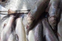 卖在街市上的鱼 免版税库存图片
