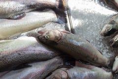 卖在街市上的鱼 库存图片
