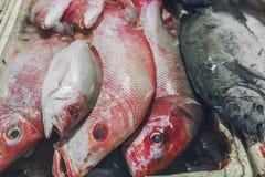 卖新鲜的海鲜钓鱼在旅游胜地地方市场上在Jimbaran,巴厘岛 免版税库存图片