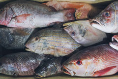 卖新鲜的海鲜钓鱼在旅游胜地地方市场上在Jimbaran,巴厘岛 库存图片